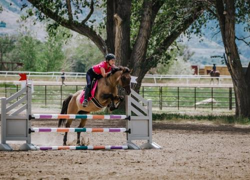 Young horse jumping with rider