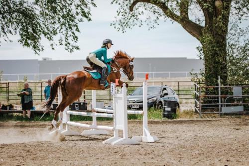 Brown horse jumping with rider