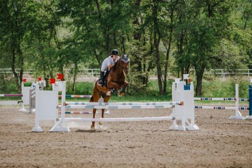 Horse jumping bars
