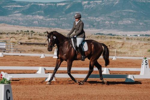 Horse and trianer