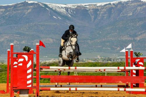 Horse jumping with trainer